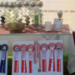 arabAll Trophies of the event E Ch, A Ch, NC Ch, special Trophies IMG 0331 (2)